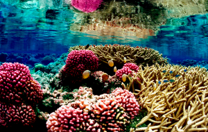 coral reef via adventure-journal.com